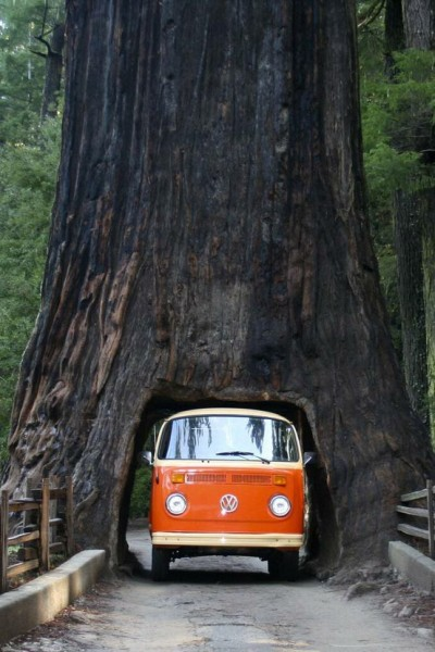 anggepanganiban:  sunsurfer:  Drive Thru Tree, Sequoia National Forest, California photo via nero749  @iamderekramsay