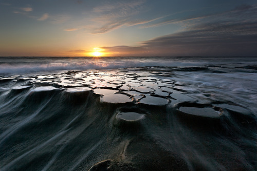 magicalnaturetour:  Cellular Flow by Max Vuong :)   thats pretty where is the pic from?