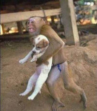 Where is the monkey going with the puppy ? xD