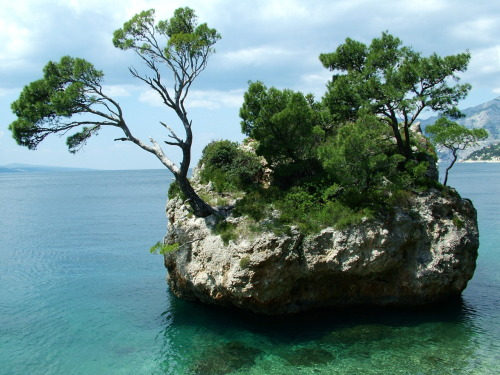 rock island with its own miniature forest, off the coast of Brela, Croatia  I want to live there