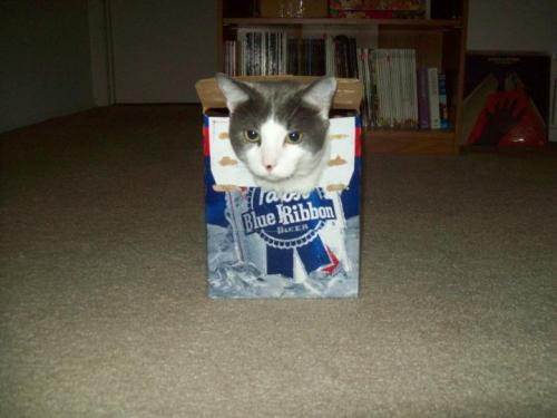 Get out of there cat. you are not of legal drinking age or even species for that matter. and if you did drink i'd like to think that your taste would be more refined than Pabst.