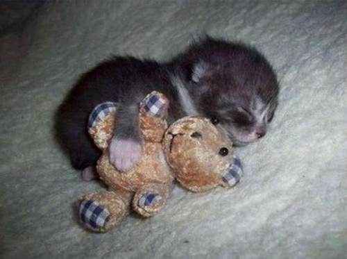 Aw, cute kitty. So small.