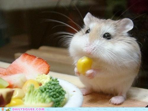 This gerbil is the boss. Seriously.  lolcat:  OMG I HAZ A CORMS