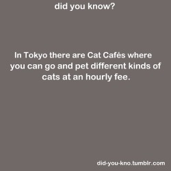 weirdalcamus:  did-you-kno:     Source  Alexis.  OK WE HAVE TO MOVE TO TOKYO