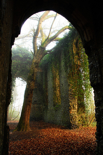 "Creepy gothic church ruin in Norfolk, England ""Local myth has it that the nun who lived here was a witch with a wooden leg. After she died and was buried in the church, this tree began to grow from her grave, having sprouted from the wooden leg!"" (by Marmaduke.)"