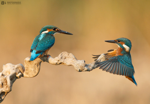 Kingfisher games | by BogdanBoev