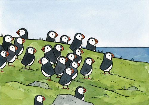 A new Puffin illustration based on the puffin colonies I visited.