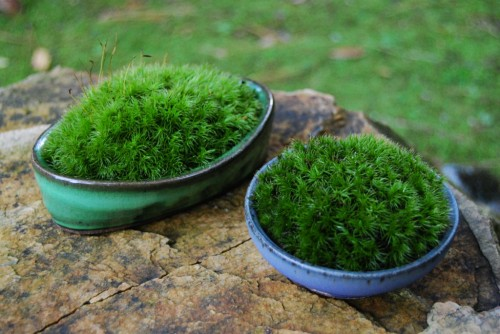 still waiting for the moss in my terrariums to start looking more like this and less like it's on the verge of death…