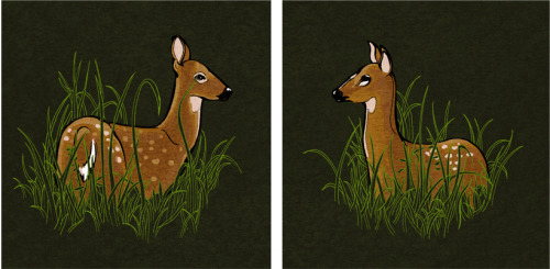 Day 61/100 White-tailed Deer If I had a small garden, I probably wouldn't love these animals very much. Instead, all of my plants are safe from hungry deer in my little apartment on the fourth floor. I've also been lucky to have never had a run-in with one while driving. Coming from LA, the largest animals I ever saw roaming freely around were house cats and the occasional possum. Wolves and coyotes would come down from the mountains every now and then but I wouldn't really go looking for them the way I do with deer. I've been visiting these two fawn over the past few weeks at the Nature Center - they're usually in the marsh romping around, eating grass, or staring back at us curious humans. The Shaker Lakes area is so populated with deer that you can count on catching them around dusk in the wooded area and even in peoples' yards. They're just such beautiful and shy creatures to watch.