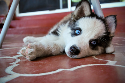 fyhusky:  (by marmotdreams)