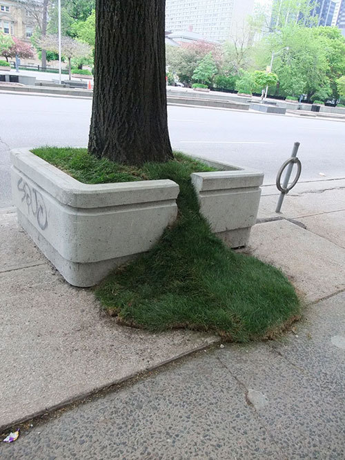 Cool street tree pot.