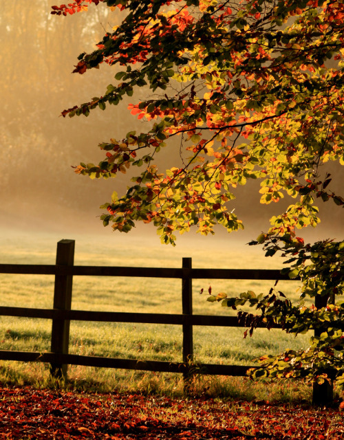 (via no description, autumn, countryside, fence, england, by terry uploaded by skip)