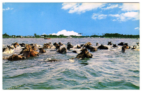 Assateague to Chincoteague by clotho98 on Flickr. The annual Pony swim, as depicted in Misty of Chincoteague. Via Flickr: 1960s postcard from Pony Penning Enterprises, Inc., of the Pony Swim at Chincoteague, Virginia.