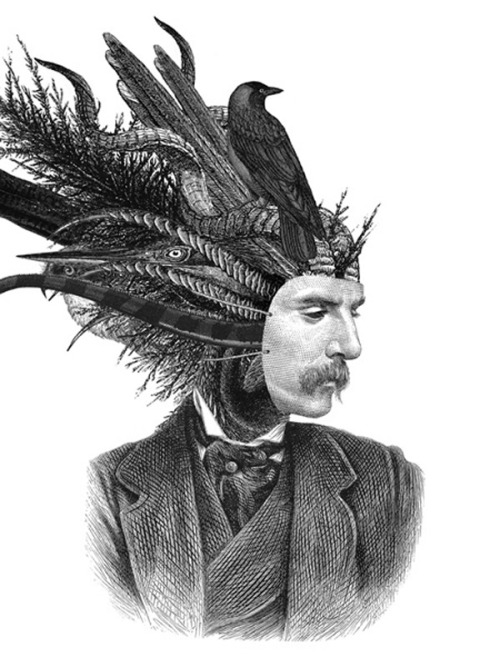 "theastonishingpost:  Dan Hillier ""Feather and Claw"" Series"