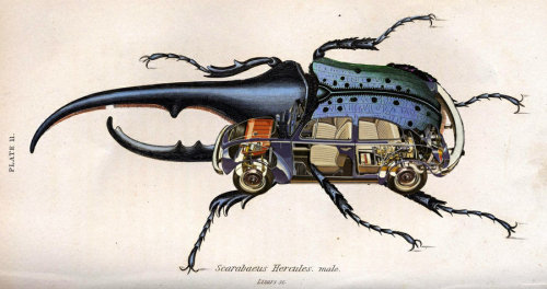 whobaloo:Beetle Interior by ~RevolverWinds - so imaginative