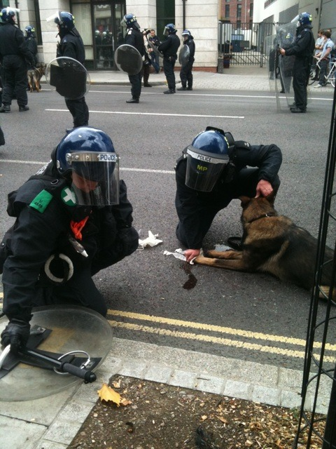 strawberryavalanches:  -insomniaticdreams:  Police Dog being treated after having been attacked by rioters. I am so angry. So fucking angry. This is a whole new low. Harming animals? Do you think yourself proud for that? Everything about this breaks my heart.  P.S. The next person to make a comparison has to be reminded that what happens in the riots is NOT A POPULARITY CONTEST. It's not about pitting tragedies against each other, it's about viewing this as one sole tragedy within itself. Get a grip.  my heart  Wow. That's so fuckin pathetic. Harming animals in a riot. How much lower can a person get? God damn.