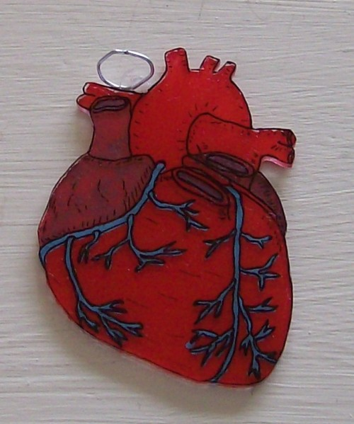 sereknitty:  A shrinky dink heart that I made. I painted this one with acrylics. I do so enjoy anatomical hearts.