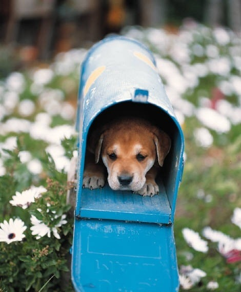 I would love to find this little guy in my mailbox