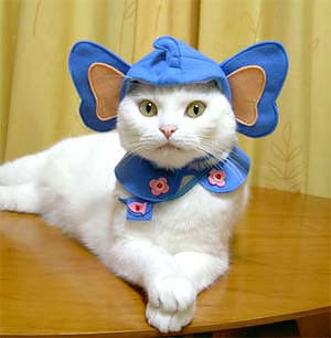 yourenotwelcomee submitted:  Cat dressed as an elephant.