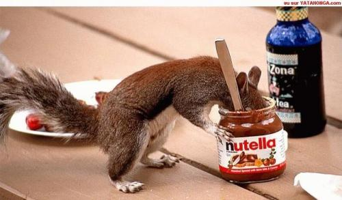 Would you still eat that Nutella even with all those squirrel germs up in it? I might.