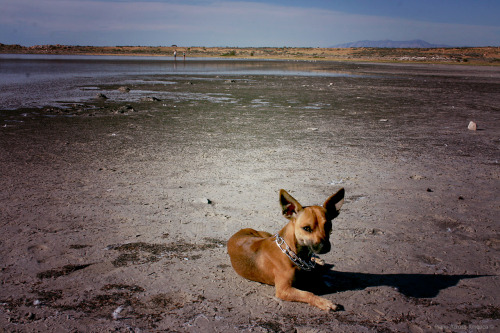 Brando at the Great Salt Lake. He actually went inside the lake and tried to drink the water. His face was priceless! Aug 6