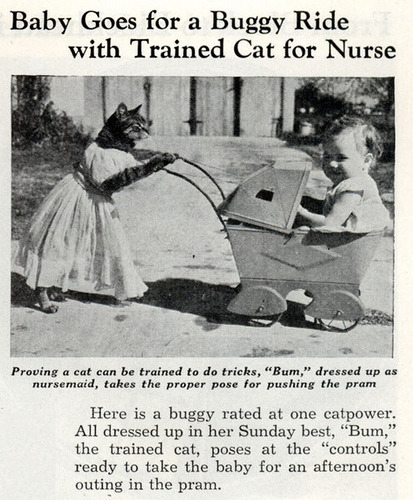 Date unknown A cat in a dress takes a baby for a ride. (via clair_voyant)