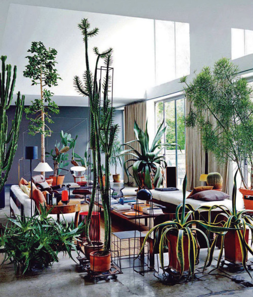 Living the Cactus Life: the plants are as important as the furniture. Home of Maurizio Zucchi.