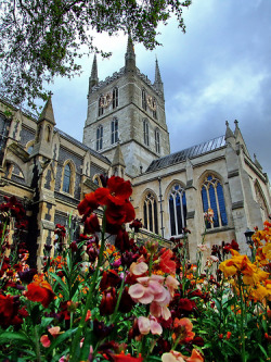 allthingseurope:  Southwark Cathedral, London, UK (by Rhiaphotos)
