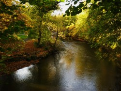 River Kelvin, Glasgow in Autumn. [mine]