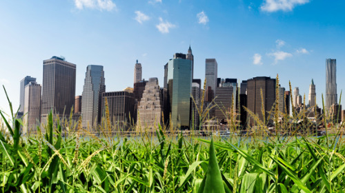 Can Agriculture Go Urban? Eric Wesoff Urban agriculture has the potential to change the way we eat, farm, and our relationship with the food on our plate. Migrating sustainable agriculture closer to customers addresses a laundry list of looming concerns — trucking, water, energy costs, carbon emissions, and pesticides. Instead of pesticide-intensive factory farms, we can envision organic foods grown in Brooklyn greenhouses. Instead of concentrated animal feeding operation (CAFOs), think backyard chicken coops. What about using technology like LEDs to provide indoor growth environments or growing food vertically instead of using precious urban real estate? Why not grow vegetables in greenhouses on roofs in Manhattan or Mumbai? Demand for food is rising, particularly in rapidly growing economies like China and India, fossil fuel-based fertilizers are getting more expensive, and water is an increasingly scarce resource. Almost a billion people in developing countries are undernourished, according to the Food and Agriculture Organization (FAO). Why not grow food vertically?   AeroFarm is a startup that looks to do just that. With a modest amount of land, plus water and electricity, AeroFarm claims that they can grow greens at the same cost as traditional farming areas in California. Yields are likely modest but it's a novel solution for city dwellers if the energy balance is favorable. New York's Gotham Greens builds rooftop greenhouses that combine advanced horticultural and engineering techniques to optimize crop production, crop quality, and production efficiency. Their climate controlled facility can grow produce, year-round. Venture capitalists are paying close attention to the green agriculture market and will certainly look at urban farming if the market potential exists. Recent VC investments in green agriculture include WeatherBill with investment from Google Ventures and Khosla Ventures; as well as startups AgraQuest, Yulex, and Holganix. Aquaponics can produce fresh fish and vegetables year-round, with a combination of aquaculture and hydroponics in an integrated, soil-less system. In these systems, fish waste fertilizes plants, while plants naturally filter water for fish. Aeroponic farming uses mist to grow plants without soil, another-urban friendly farming technique. And urban agriculture has the potential to provide jobs and strengthen communities while producing affordable food. Will Allen, a farmer who produced a quarter of a million dollars worth of food on two acres in Milwaukee, won a $500,000 genius award from the MacArthur Foundation in 2008 for his urban efforts. First Lady Michelle Obama is planting an organic garden on the White House lawn and the President is touting urban agriculture as a means to revitalize cities. Can tomorrow's farmer be an urban entrepreneur with a greentech thumb? Eric Wesoff is a Senior Analyst at GreenTechMedia. Eric's expertise covers solar power, fuel cells, biofuels and advanced batteries. His strengths are in market research and analysis, business development and due diligence for investors. He frequently consults for energy startups and Silicon Valley's premier venture capitalists. TAGS farm, farming, locavore, organic farming, sustainable agriculture, urban agriculture, urban farm,urban farming, vertical farming, water-energy nexus