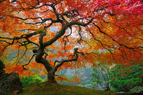 therandominternet:  Beautiful tree.