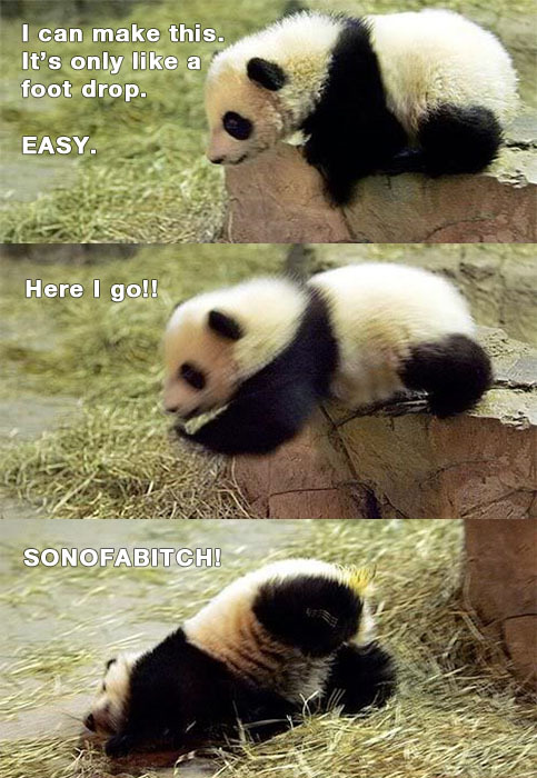 oh-sutoraipu:  Y U SO SILLY PANDA?