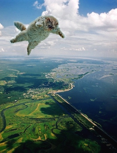 "thefrogman:  ""Alright Mr. Fluffers. We've reached jump height. Are you ready for this?"" ""Am I ready? I was born ready. I'm going to be the first cat to ever sky dive solo. LET'S DO THIS THING!"" ""Haha. You're so awesome Mr. Fluffers. Now let me just get your parachute on….. Mr. Fluffers? Where'd he go?"""
