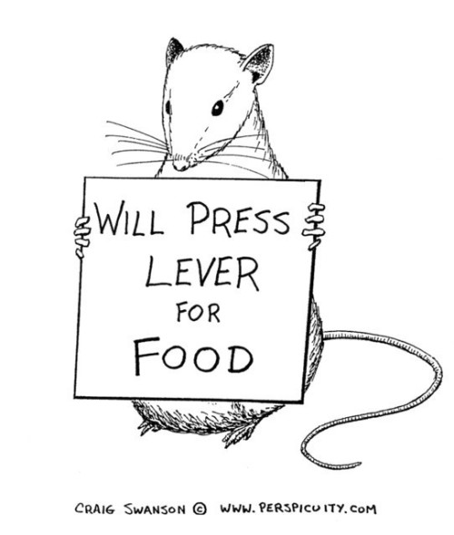 psychologyjokes:  Press Lever for food