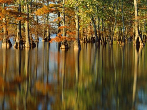 A great picture of a forest of trees growing underwater in autumn.