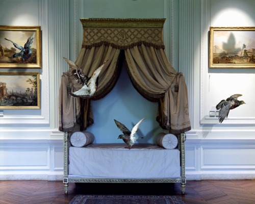 taxidermy-in-art:  Karen Knorr, The Green Bedroom Louis XVl, Musée Carnavalet, 2004-2006From the Fables series90 x 70 cm