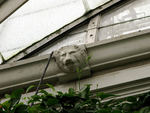 A lion in the rafters of the Enid A. Haupt Conservatory. For Lions of New York. Photo by Ann Rafalko, Director of Online Content.