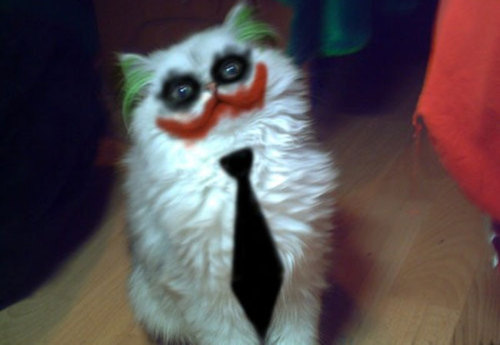 today:  uproxx:  Why So Serious Meow?  Folks, we have a winner.  Next on my to- do list.