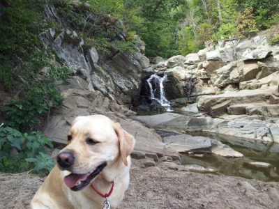 "Murphy in front of the water fall at Scott's Run - a mere 15 minutes from my house! I love my life. Living in Northern Virginia I have so many awesome places to get out into nature, but as a small female, it's not always the brightest idea to go off into the middle of the woods alone. I'm so new here I haven't met anyone to go off into the woods with me yet (if you know anyone, send them my way!), plus I watch way too much of that Animal Planet show ""I Shouldn't Be Alive,"" so I'm hyper aware of every cliche I do. Like this morning when I told my sister-in-law I was going to Great Falls, and then changed my mind at the last minute to go to Scott's Run, but didn't tell anyone. The voice-over played as I watched the re-enactment in my head, ""and that small twist of fate led the young girl into the deep, dark woods where even once it was discovered she was missing, they had no idea to look for her a mere mile down the road from where she said she would be…"" Enter Murphy. He's handsome, tons of fun, sets a great running pace, and is always super excited to see me. Needless to say I'm in love. We explored Scott's Run for almost two hours this morning! I jogged while he kept a brisk pace in front of me, leaping over logs, splashing through creeks, I was in heaven. He's the best dog and lives right across the street from me so we can go play whenever I want. His owners don't mind a bit! He's the next best thing to a boyfriend…possibly even better, it's a close call."
