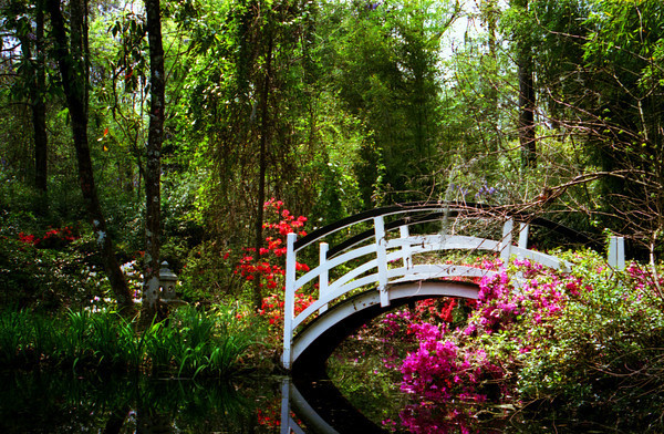 "From the 'Charleston in Color' Gallery""Magnolia Bridge No. 3"" ~ One of seven bridges that grace the beautiful grounds and gardens of Magnolia Plantation in historic Charleston, South Carolina. The gardens were first opened to the public in the 1870s, but some sections of the gardens are more than three centuries old."
