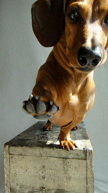 hellocute:  Look Ma, I can balance on 3 feet. YEEUH. (via pinterest)