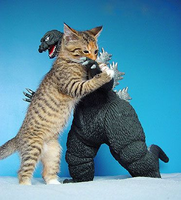 cat is more powerful than Godzilla!