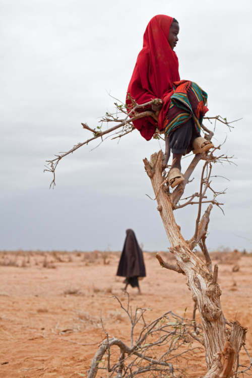 killer-butterfly:  A Somali refugee girl sits perched on a tree in Ifo camp, Dadaab in KenyaPhoto By: Brendan Bannon