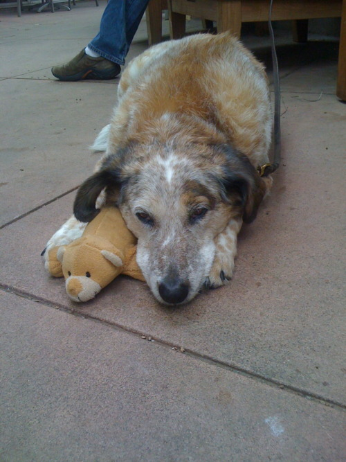 animalswithstuffedanimals:  Rosey and her little stuffed bear. Submitted by Christopher Scott Knell
