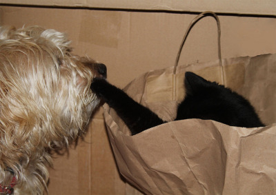 Surprise! by jinterwas on Flickr.Another Caturday in the bag…