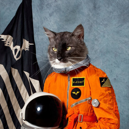 era462:  ground control to major tom cat