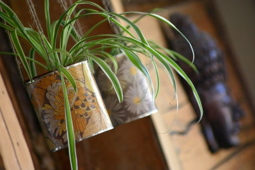 craftjunkie:  Tin Can Planter {How to} Found at: http://wabisabiwanderings.blogspot.com