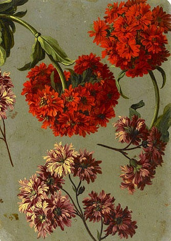 stilllifequickheart:  Pancrae Bessa Mauve Chrysanthemum and a Red Lychnis Chalcedonica 19th century