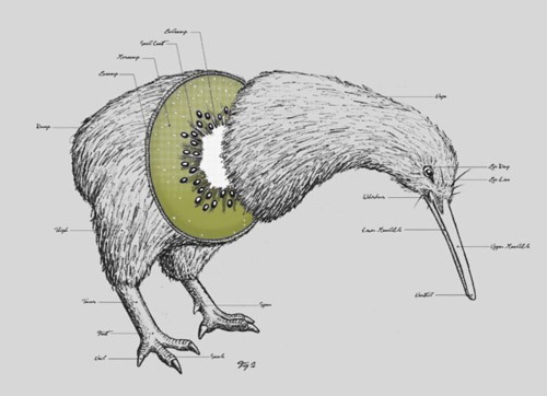 retrogasm:  Where Kiwi comes from… via