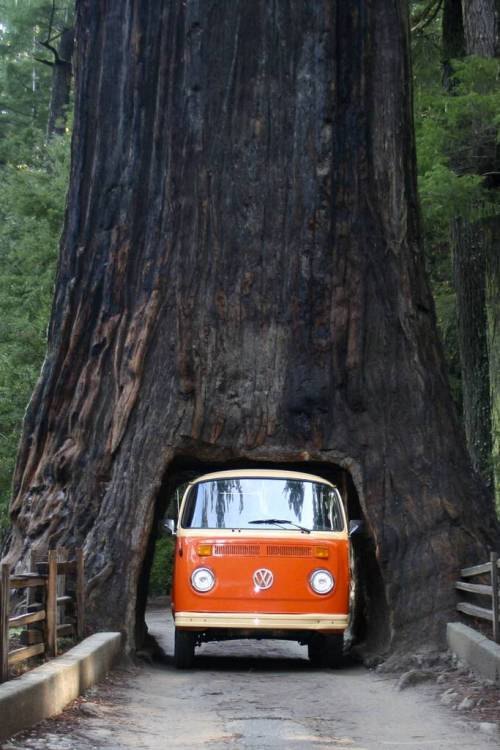 annoiato:  Redwood Forest in California